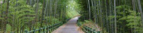 野外撮影緑地公園2018080102